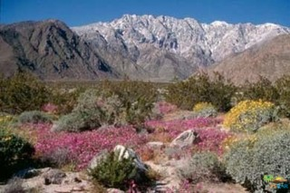 Photo of Snow Creek Road, Palm Springs, CA 92262